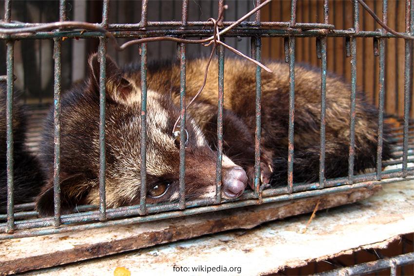 Say No to Kopi Luwak
