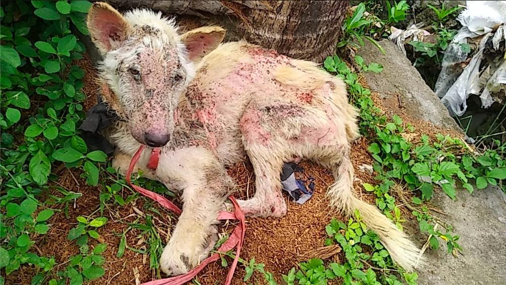 Rescue Anjing Bali